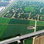 Kody QR w Chinach. Wielki kod QR ułożony z przyciętych krzewów, promujący organizację turystyczną miasta Xilinshui.